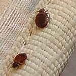 Call our bed bug control professionals today! 760-820-4354