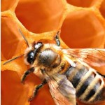 Call our bee control professionals today! 760-820-4354