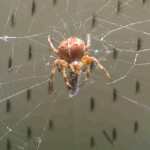 Call our spider control experts today! 760-820-4354